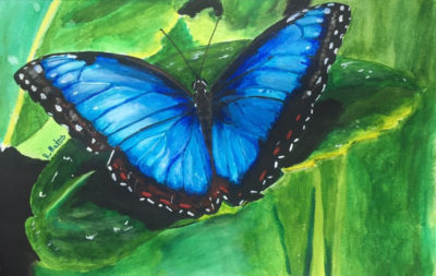 A painting of a menelaus blue morpho butterfly